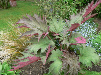 Plants_002