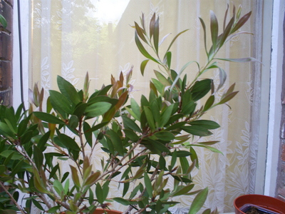 A_plant