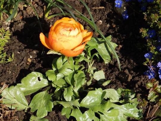 Boudicca_and_garden_025