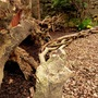 Forest_stump
