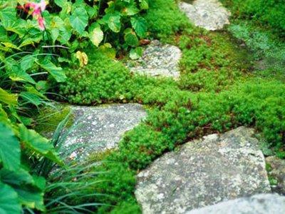 Garden_rockery_lg_gt_full_width_landscape