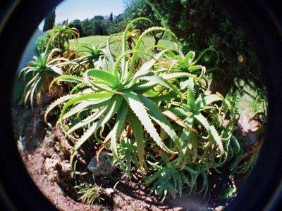 Unkown_plant