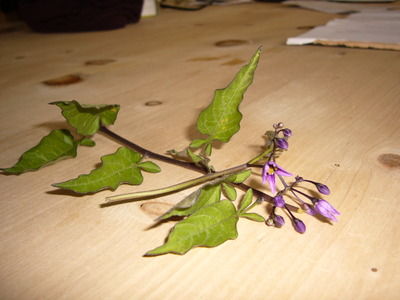 14.06.10_hedge_plant_002