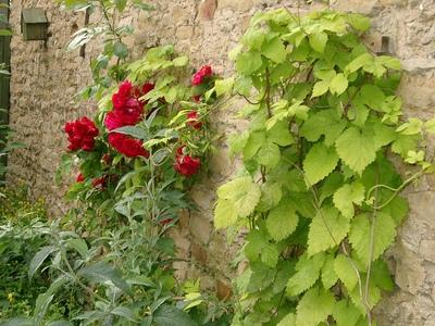 Summer_garden_2008__finn_and_popps_014