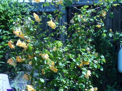 June_garden_023