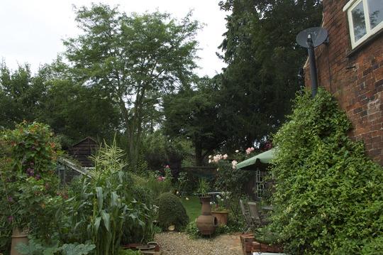 Garden_tree_view