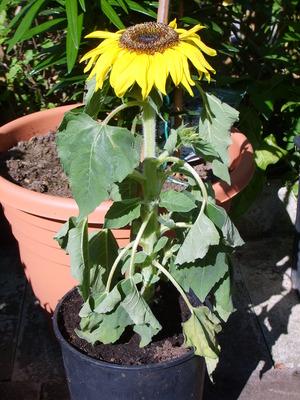 Flowers_2010_129