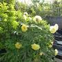 Garden_pebbles_016