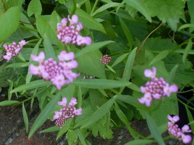 June_21st_10..more_summer_plants..._030