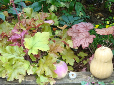 Heuchera_etc._023