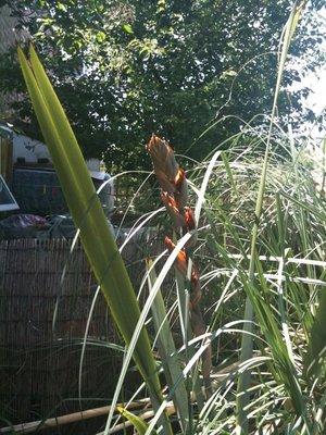 Cat_plant