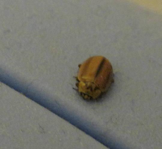 Tiny_bug_2