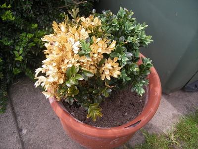 Boxus_plants_002
