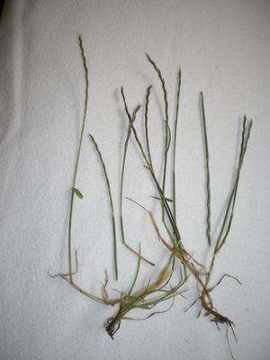 My_grass_001