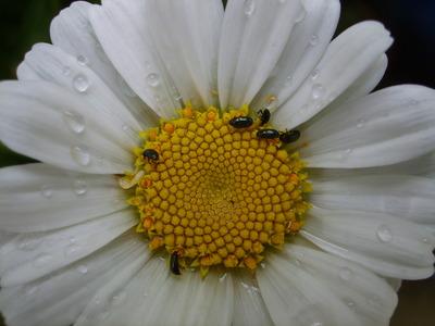 Flowers_2010_028