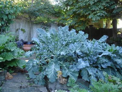 Broccolli2008_002