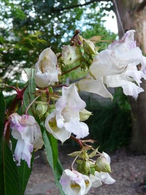 Flower31_001