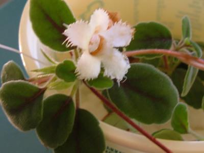 Identify-plant