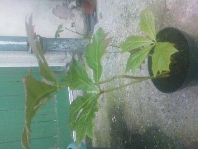 Unknown_plant_1