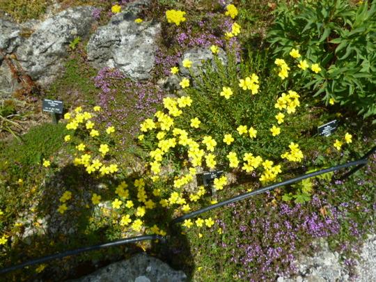 Botanic_gardens_june_2015_011