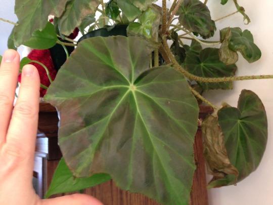 Plant_photo_1