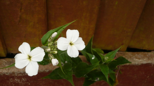 Unknown_plant.