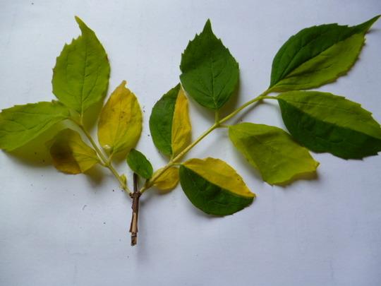 Strange_leaves_001