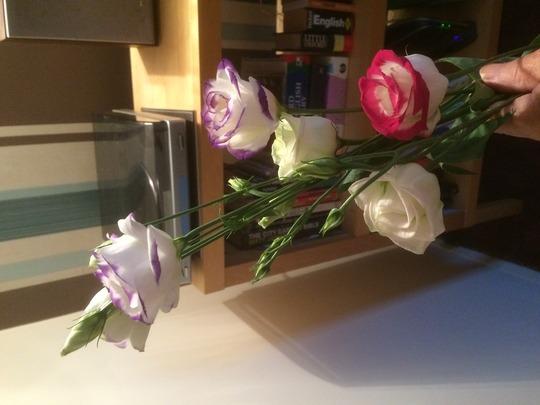 Caths_flowers