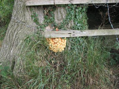 Tree_fungi