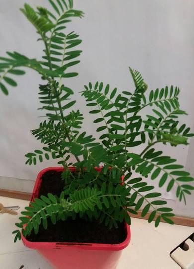 Maggies_plant