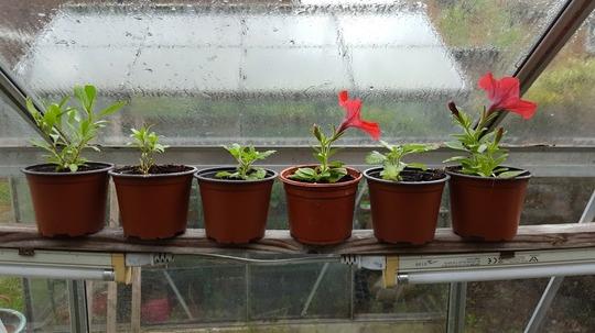 Gd_6_plants