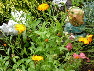 Garden_after_rain_2010_011