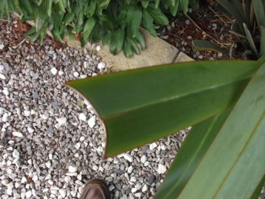 Plant_3