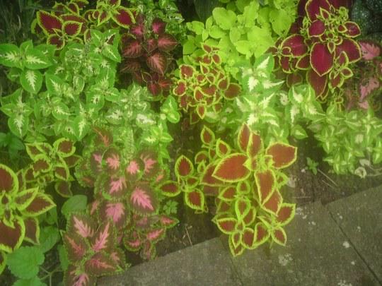 Plant_5041