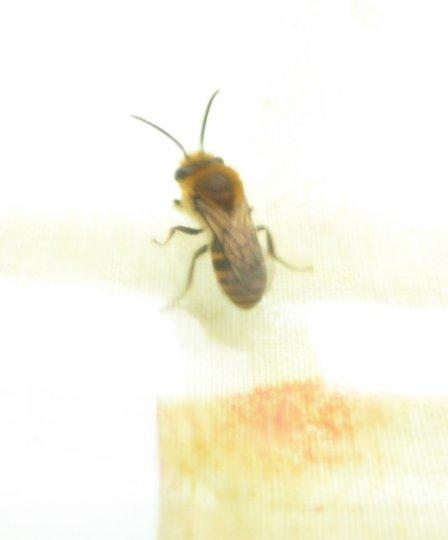 Wasp.3