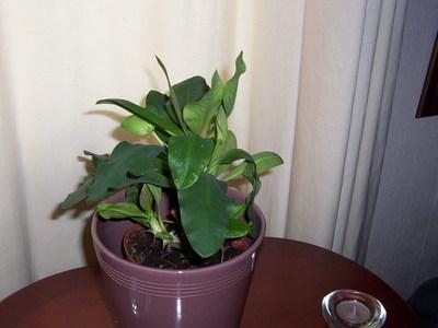Plant_x_002