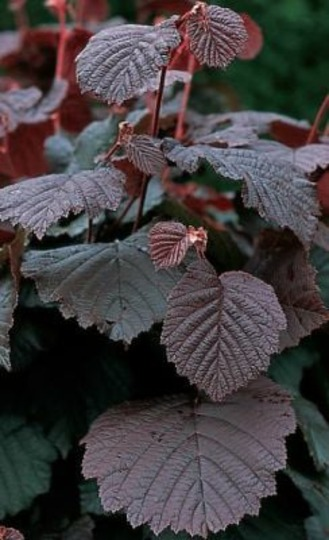 Unknown_plant