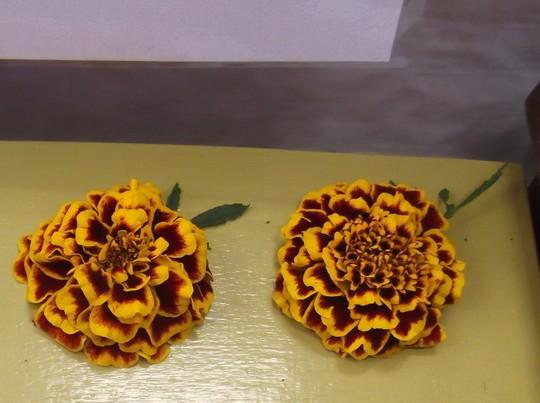 French_marigolds