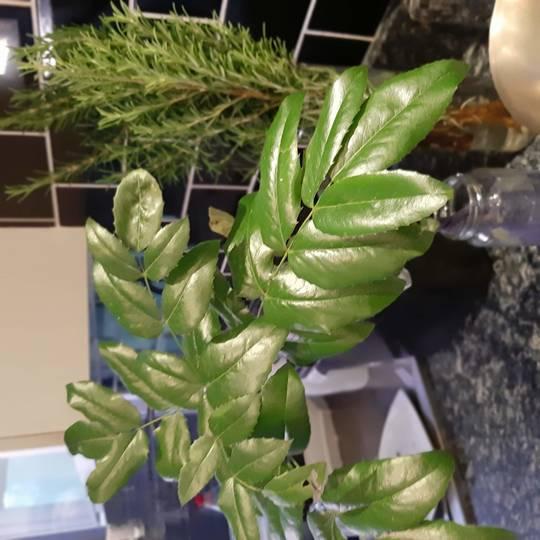 Alex_mystery_plant_for_growsonyou