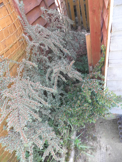 Plant_at_wee_shed_004