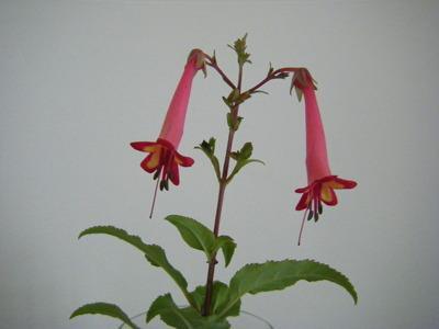 2010_040230plants0018