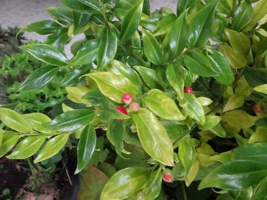 Plant_id