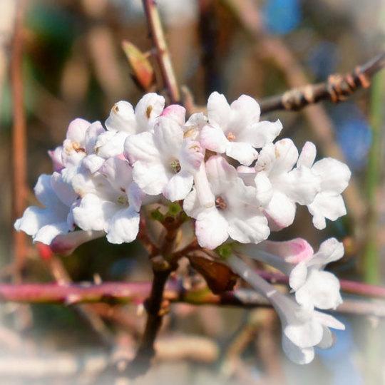 Shrub_flower01_29_nov_2020