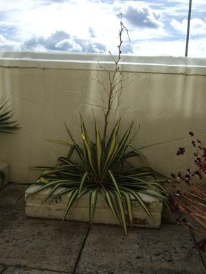 Plant_002