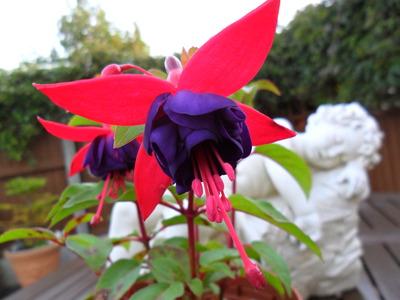 Garden_sept_24th_2010_012