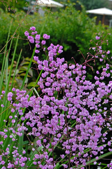 Purple_flower_stansted_sept_2021