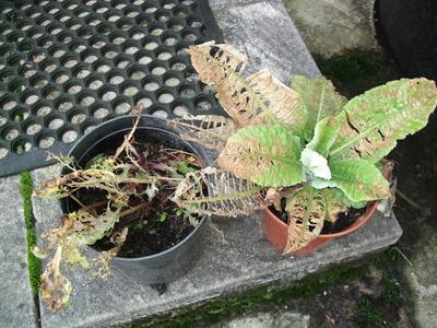 2010_0924plantspoorly0001