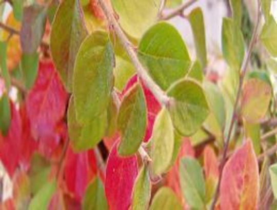 Plant_6