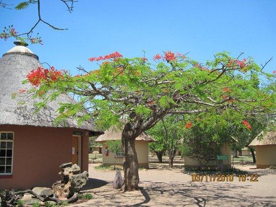 Tree_at_kruger