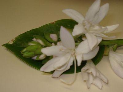 White_cluster_flower